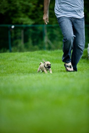 Exercising with Your Pets: It's Adorable, and a Total Do for Both of You