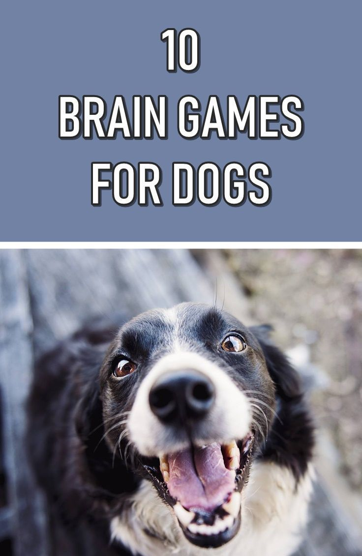 10 Stimulating Brain Games For Dogs 10 Stimulating Brain Games For Dogs