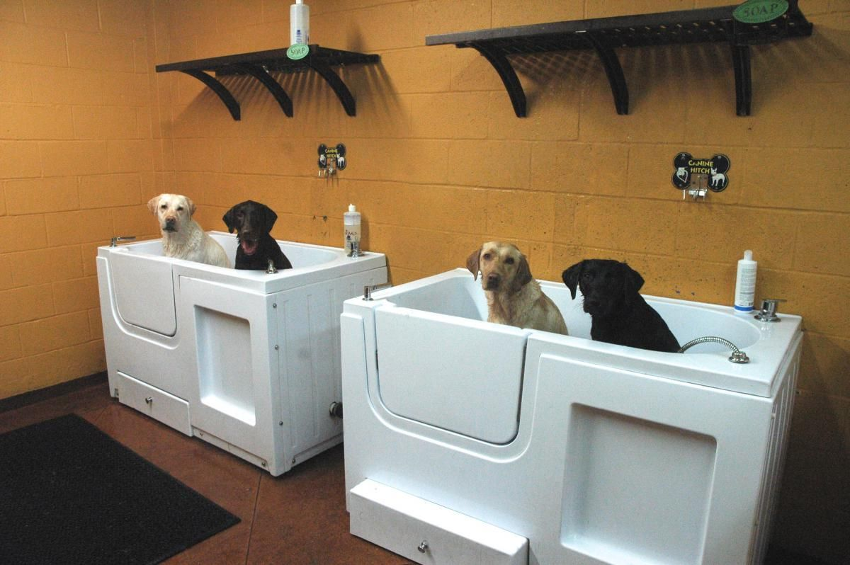 Incredible Ideas For Making Your Home A Pet Heaven Dog Wash Dog