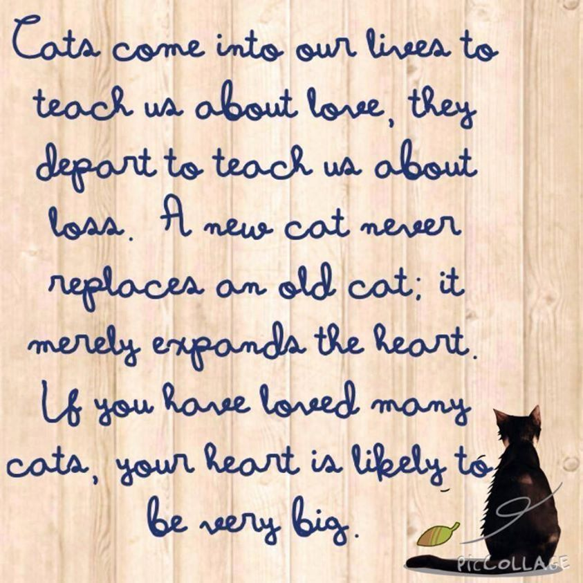Pin By Camogrrrrl On Feline Fancy Old Cats Cat Quotes Cat Love