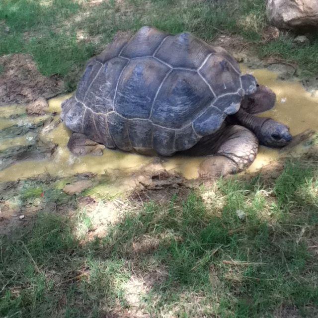 Tortoise, Tortoise Care, Tortoise Habitat