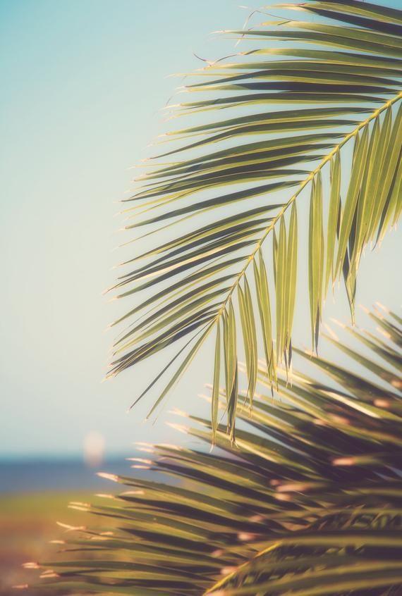 Beach Photography Botanical Print Coastal Art Beach Decor Palm