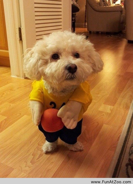 Funny Halloween Costume For My Dog Funny Picture Cute Animal