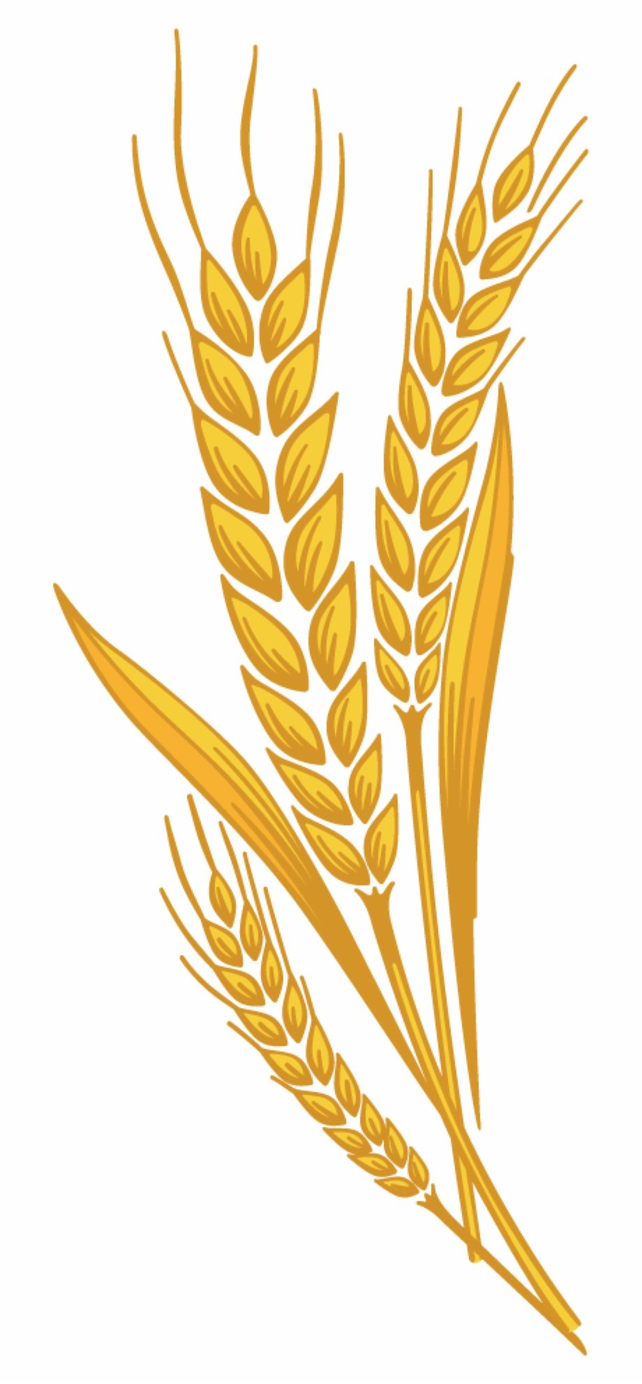 Svg Freeuse Library Barley Vector Spike Wheat Germen De Trigo Dibujo Transparent Png Image For Free Download Explo Ideias Para Desenho Trigo Germen De Trigo