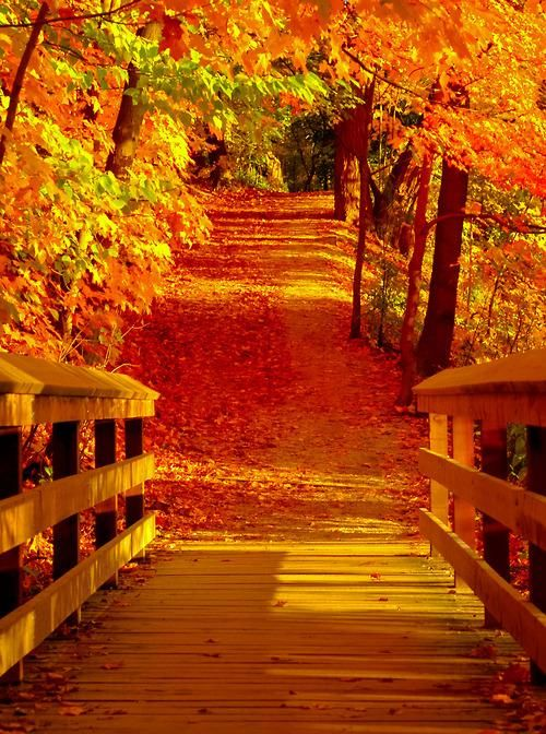 Preciso conhecer o Outono Riverwood Park, Mississauga, Canada