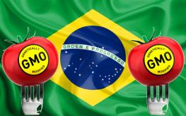 """Disso Voce Sabia?: Brasil está prestes a legalizar """"sementes suicidas"""" OGM"""