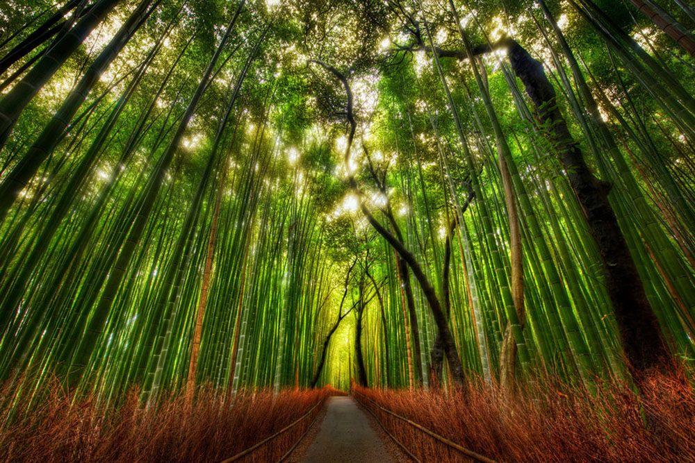 Arashiyama scenic area, located at the foot of the mountain. Nr. Kyoto  Via @apowldotcom