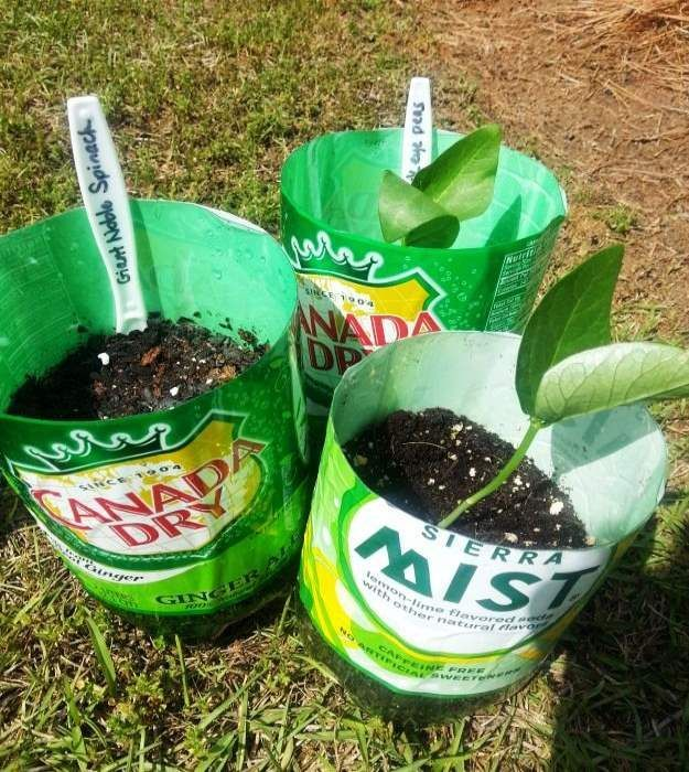DIY Bottle Planter For Seed Starting | 50 Gardening Tips And Tricks To  Become A Successful