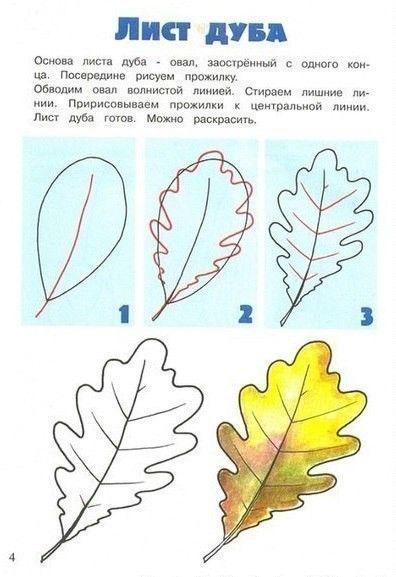 Названия деревьев и их листья. Картинки. Раскраски ...