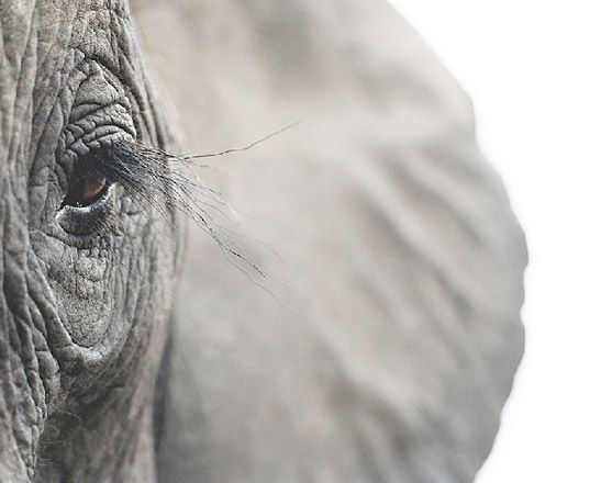 Animal portraits by Tim Flach | Photography | Lifelounge