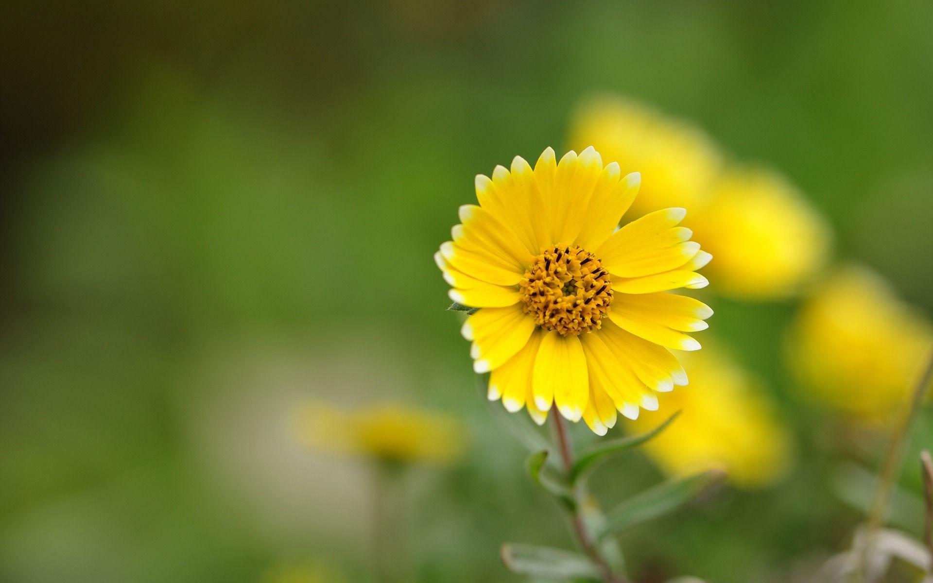 30 Flowers Desktop Wallpapers – 921573 Yellow Flower Up Close Wallpaper