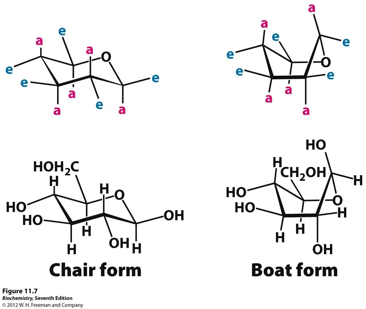 Chair form & boat form of sugars