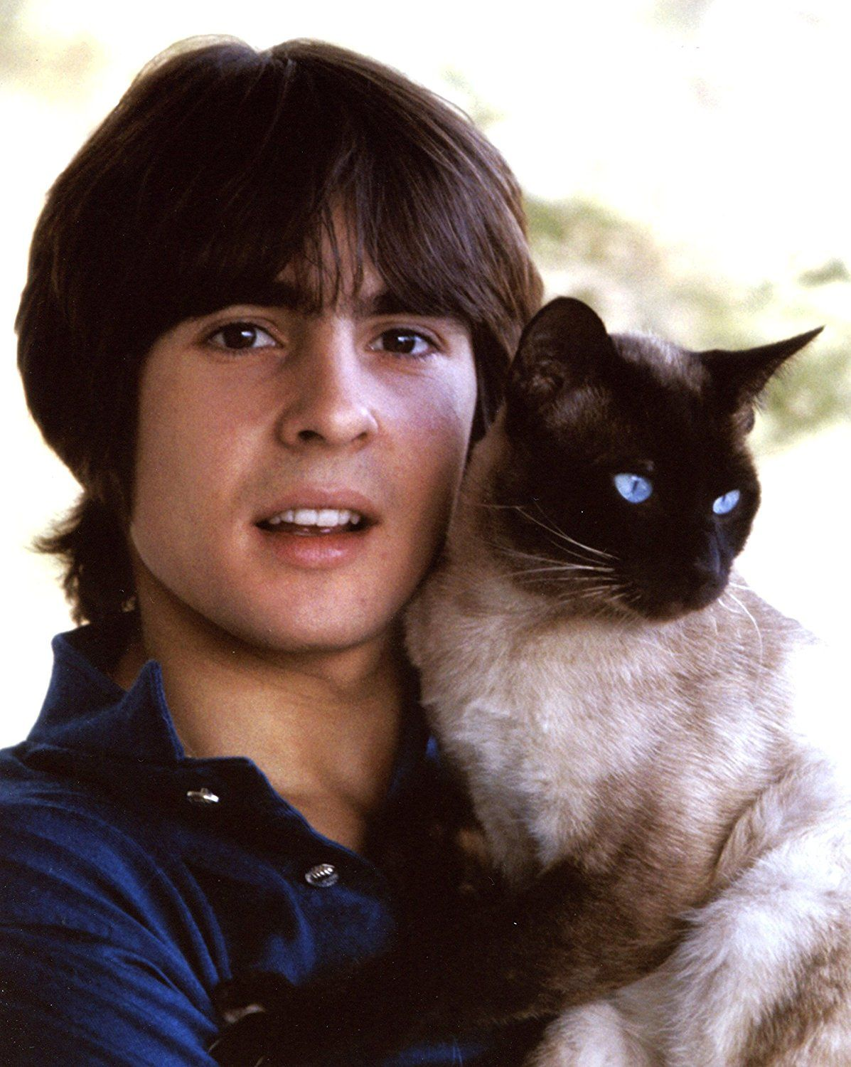 Davy Jones the Monkees with Siamse Cat 8x10 Photo T1549