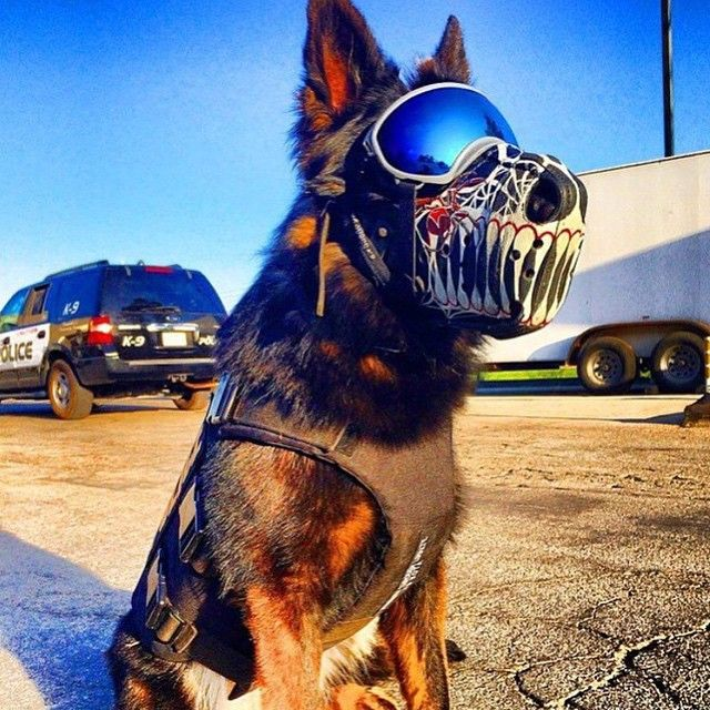 Custom K-9 muzzles! Wow! Created by: @workingdogdrygoods ! Check them out for more designs! #police #k9 #k9unit #leo #lawenforcement