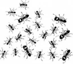 les fourmis comment s 39 en d barrasser m nage entretien pinterest gardens. Black Bedroom Furniture Sets. Home Design Ideas