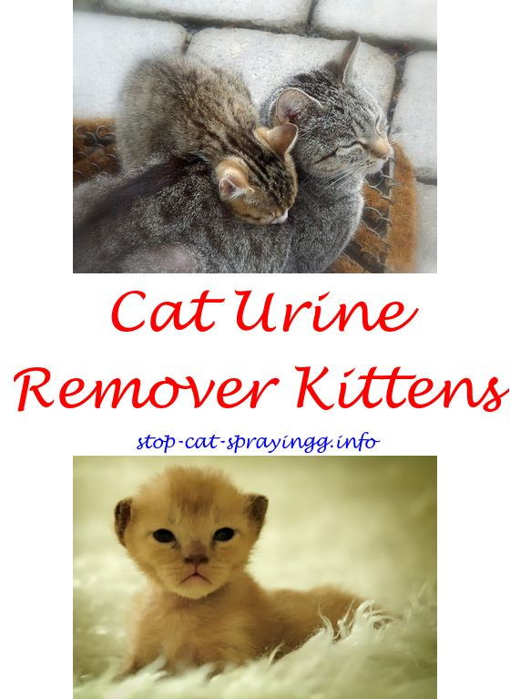 Delicieux Cat Spray Kitty Cat Spraying On Wall Tail Feet Paws Forum   Will Getting My  Cat Spayed Stop Her From Spraying.cat Urine Cleanses Spray To Keep Catsu2026