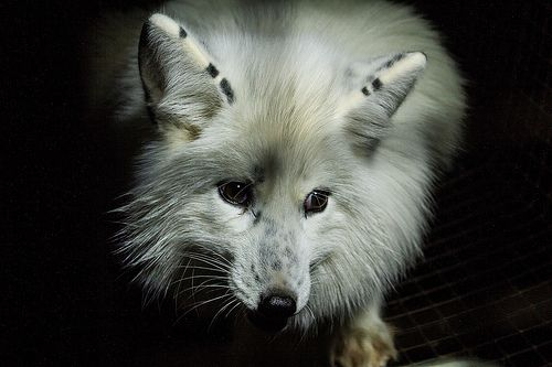 Ask Harvey Nichols to Stop Selling Real Fur