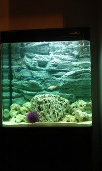 Download 620 Background Putih Aquarium HD Gratis