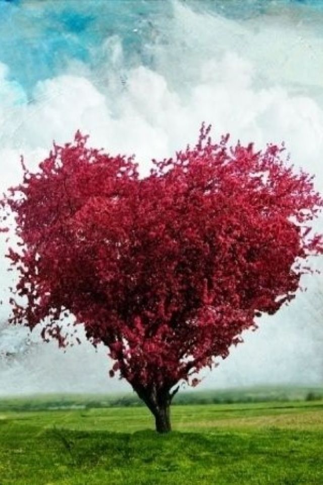 Iphone Wallpaper Valentine S Day Nature Tjn Heart In Nature Heart Tree Beautiful Nature