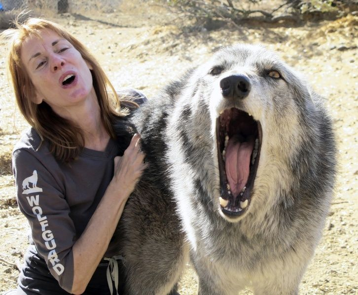 Timberwolves Animal Lorin Linder Co Founder And President Of