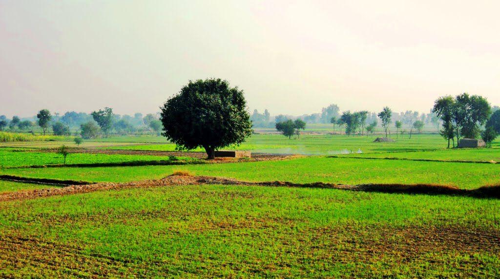 farms of my village