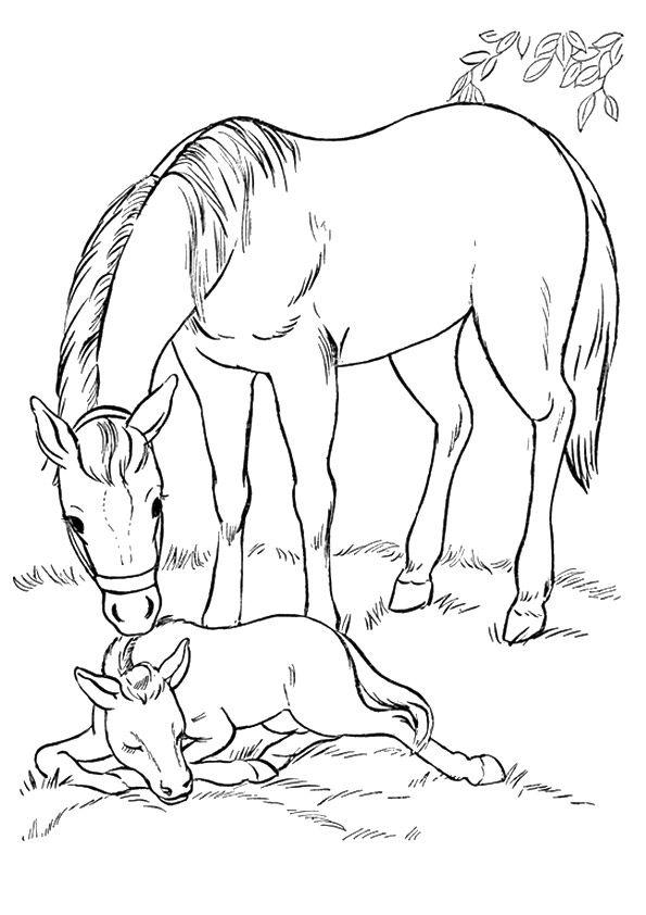 dessin cheval et poulain