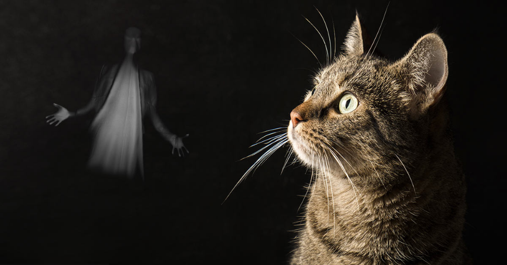 "Do Cats and Dogs See ""Spirits""? Science Confirms They Can"
