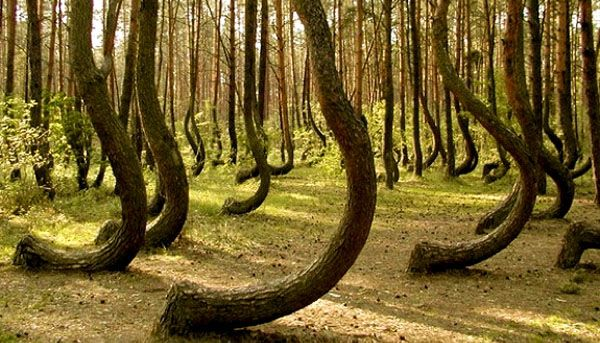 Image result for Hoia-Baciu Woods, Romania wiki