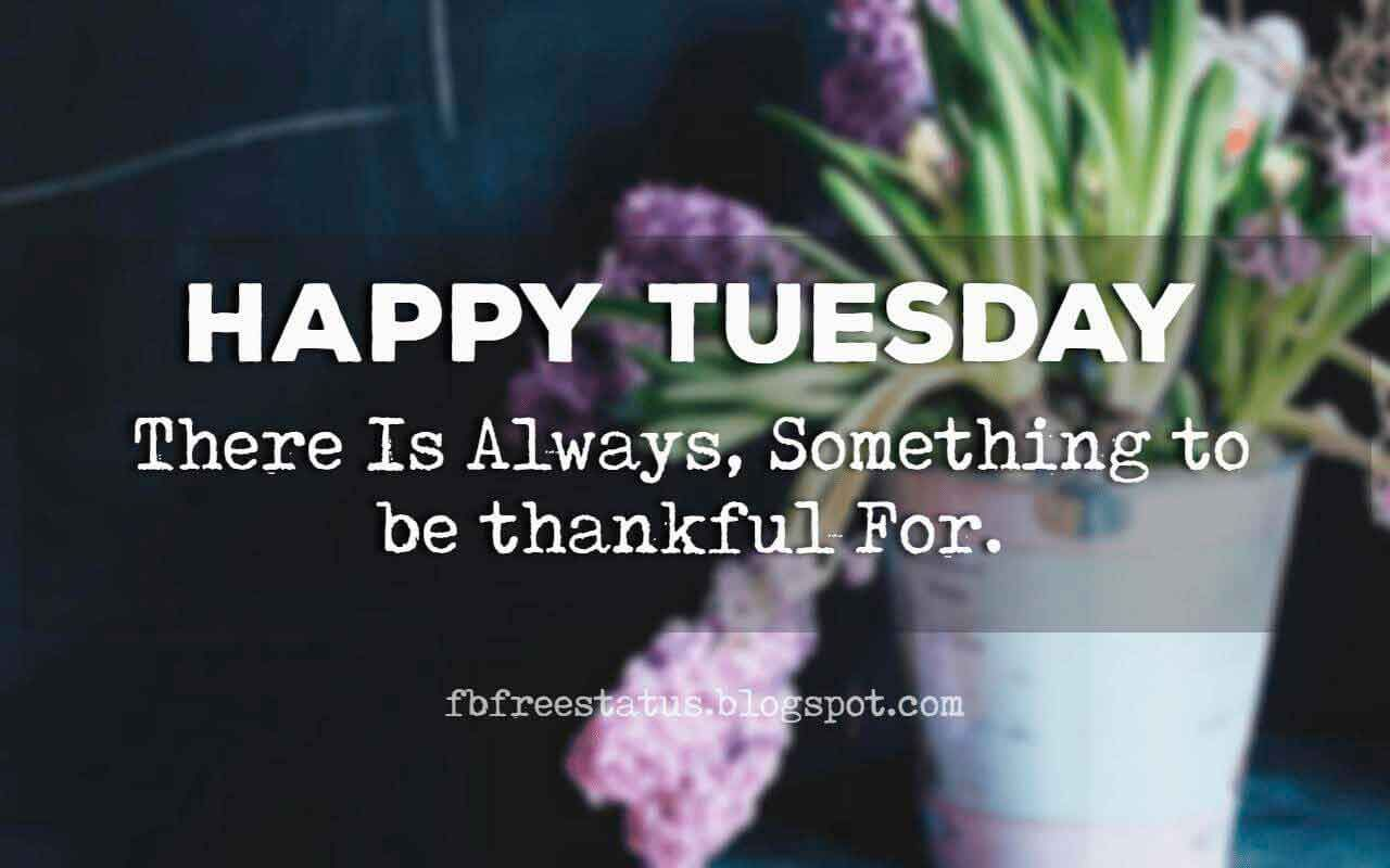 Happy Funny Tuesday Quotes With Images Pictures Happy Tuesday Quotes Tuesday Quotes Happy Tuesday Pictures
