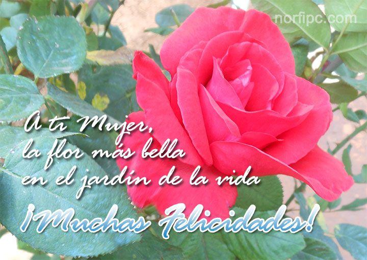 Mensajes Deseando Felicidades En El Día De La Mujer Flowers Plants Rose