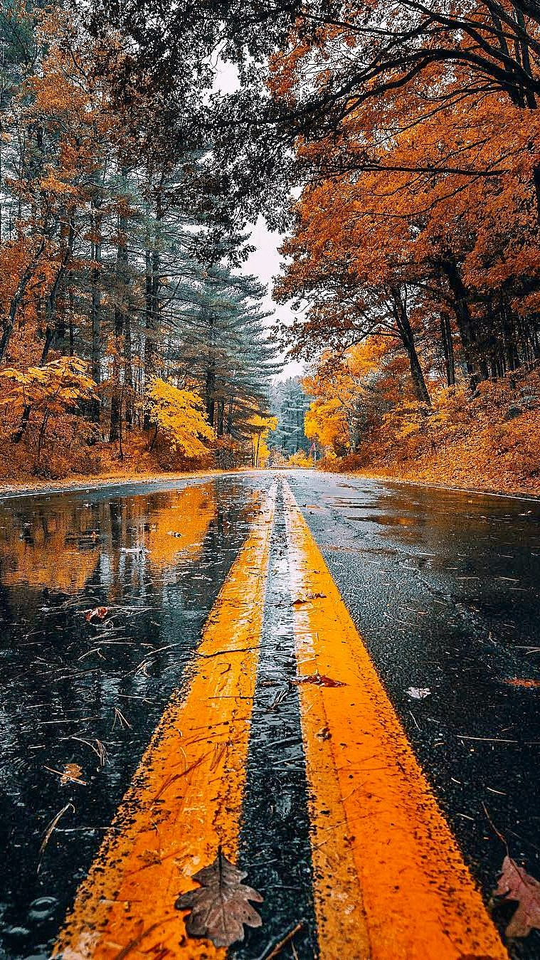 Wallpapers For Iphone 12 Pro And Iphone 12 Pro Max Fall Landscape Painting Autumn Landscape Landscape Paintings