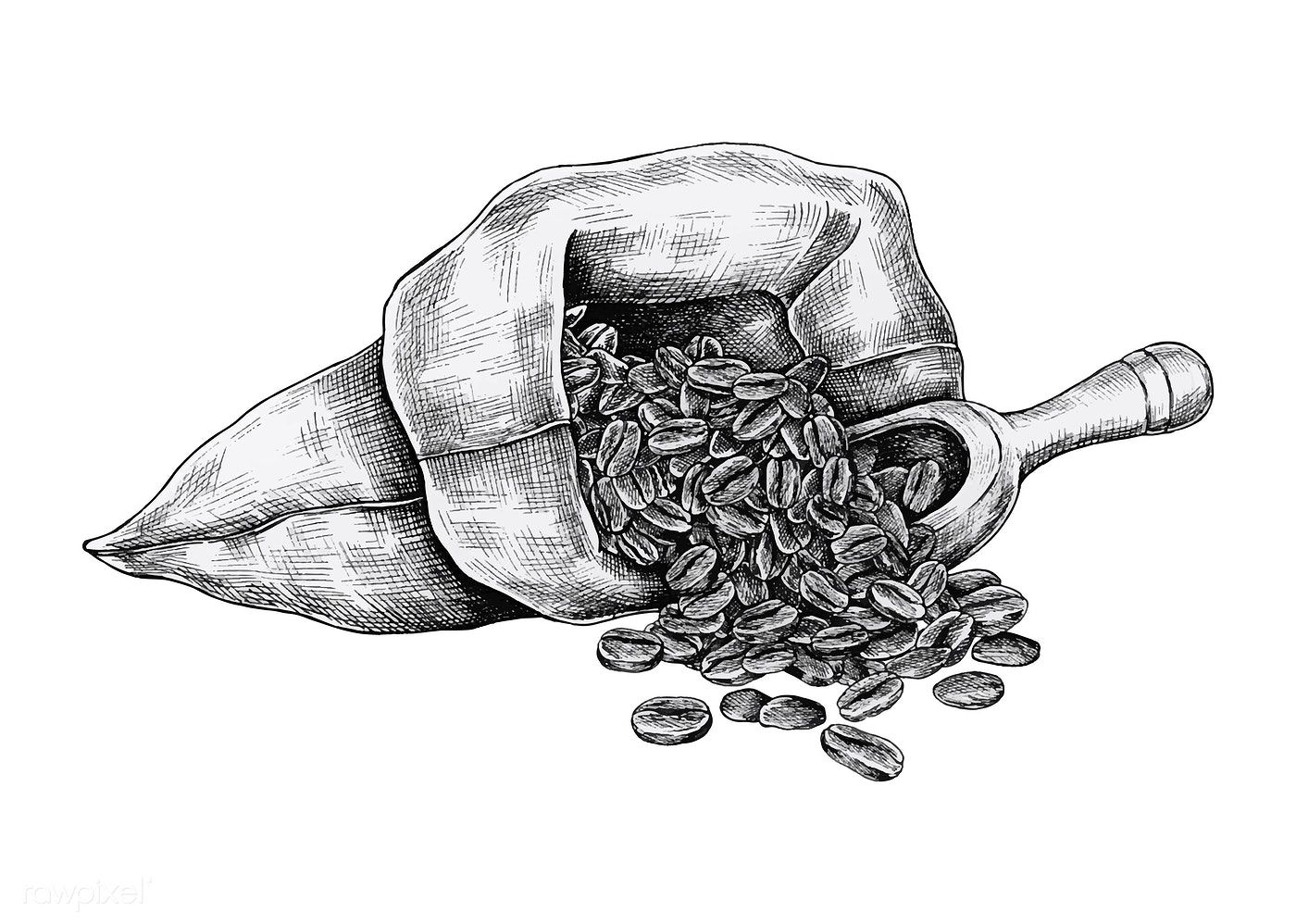 Download premium vector of Hand drawn coffee beans in a