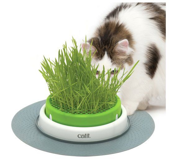 Buy Catit Senses Cat Grass Planter At Argos Co Uk Visit Argos Co Uk To Shop Online For Cat Health Cat Pet Supplies H Cat Grass Planter Cat Grass Cat Health