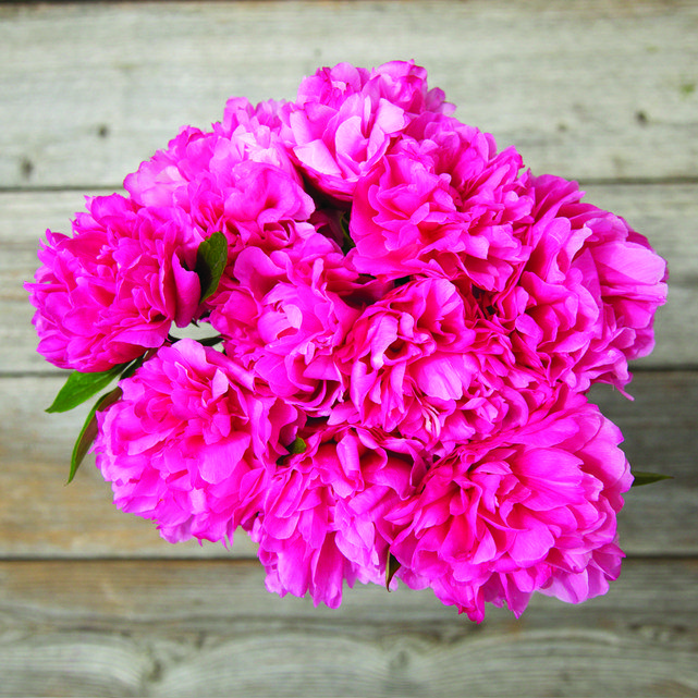 Gorgeous Peonies Fresh Cut And