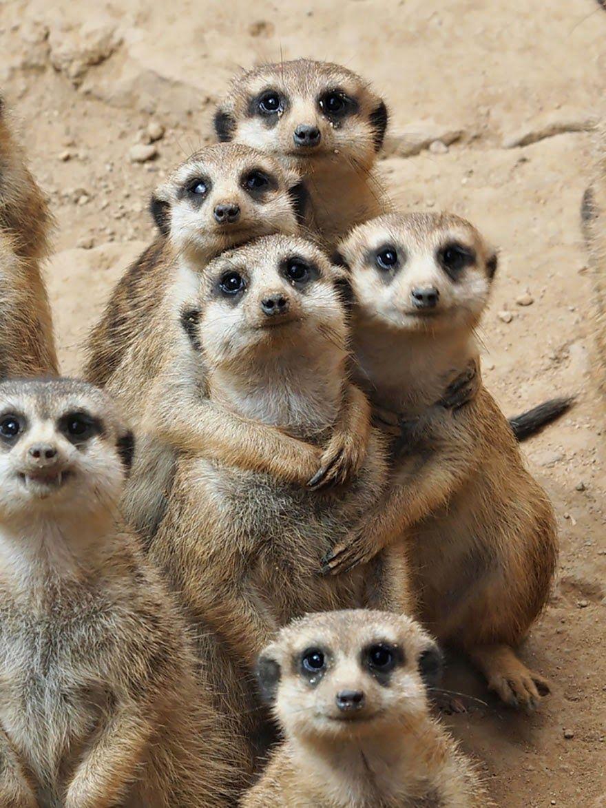 35 Momentos Animales En Familia… Te Van A Encantar!