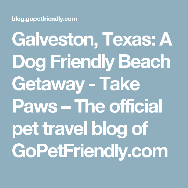 Dog Friendly Beach Getaway in Galveston, Texas Dog
