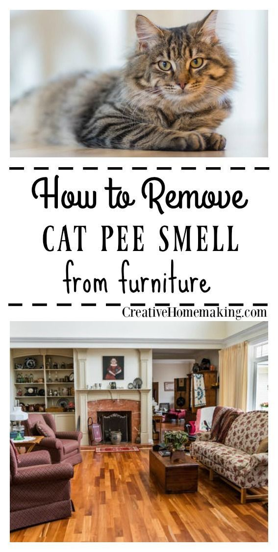 How To Get Rid Of Cat Urine Smell In