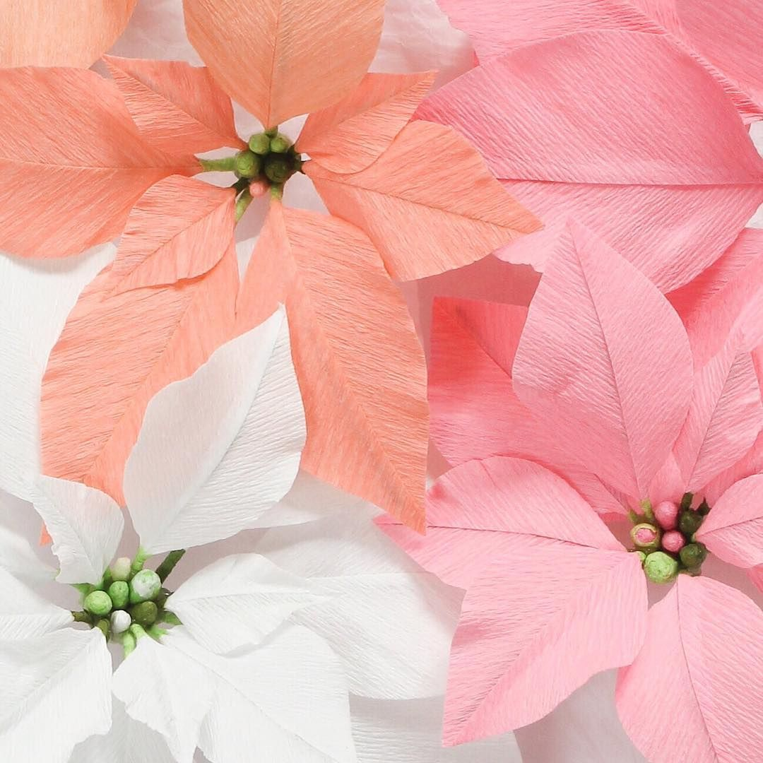 Lovely Christmas Crepe Paper Flowers Poinsettia By Susa Beech A