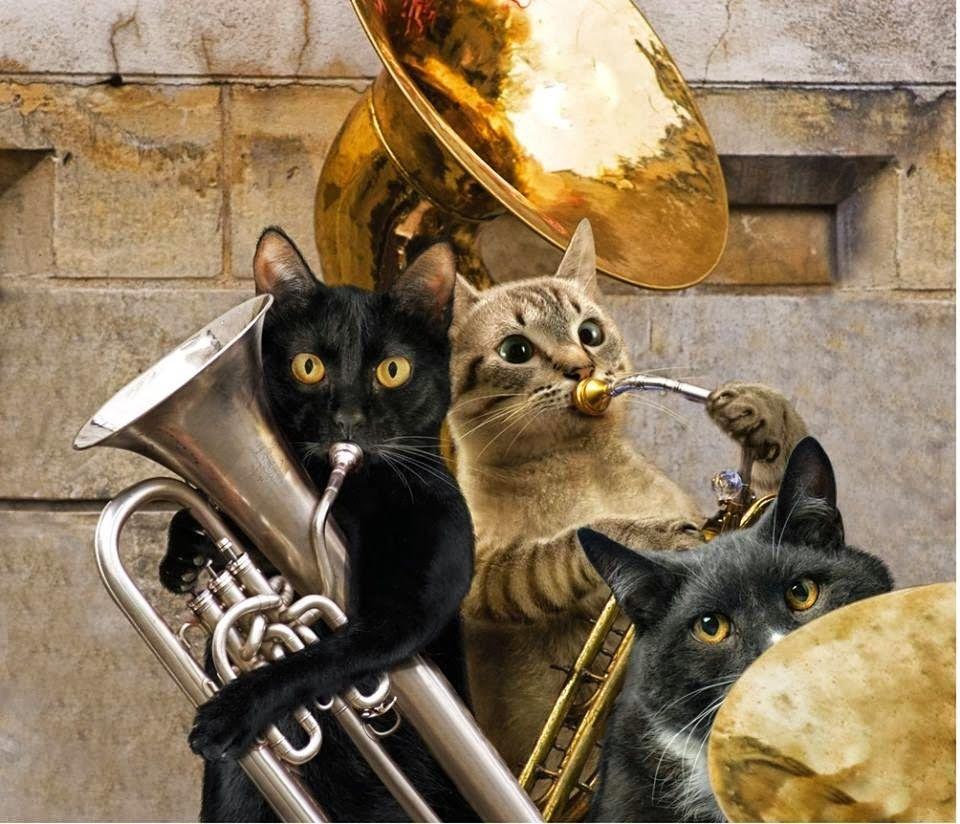 tuba cat Cats musical, Cat entertainment, Christmas cats