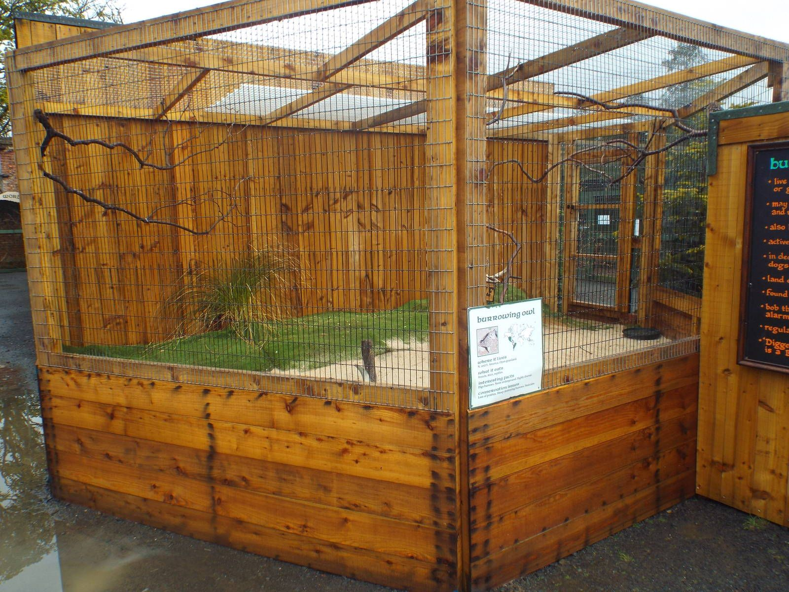 Burrowing Owl Enclosure At Scottish Owl Centre  May 6Th