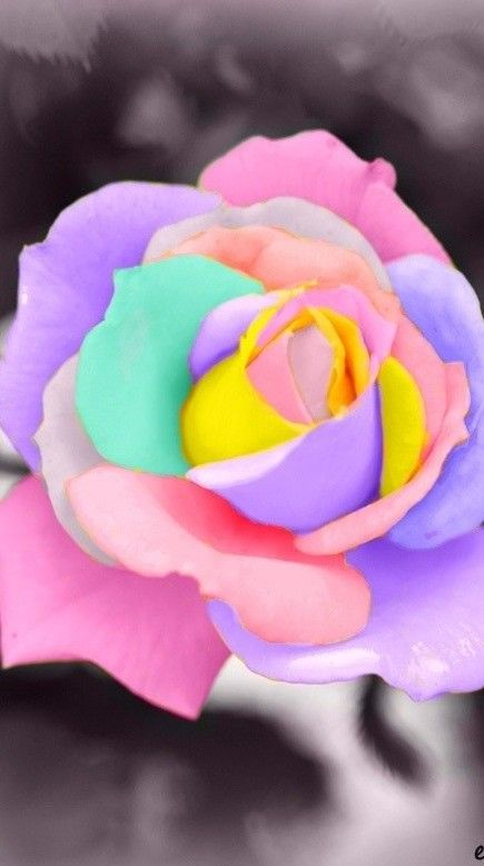 Rainbow Pastel Rose With Images Rare Flowers Rainbow Roses