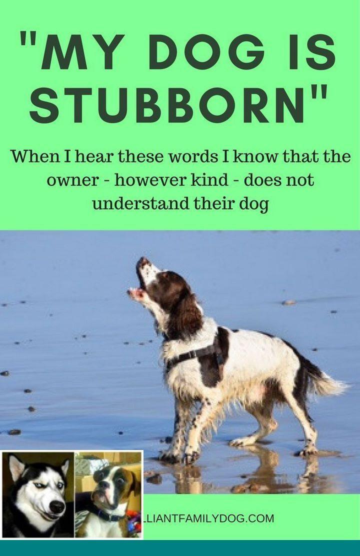 Dog Behavior Explained And Stop Dog Aggression Training