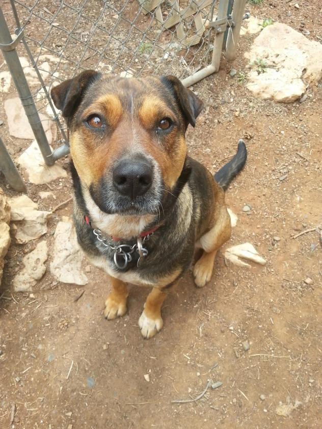 Adopt Emma Jane On Emma Jane Dogs Humane Society