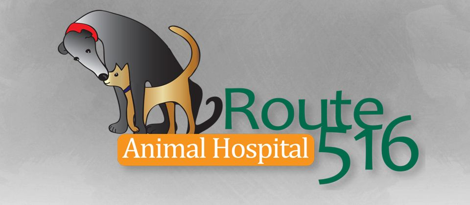 17++ Route 516 animal hospital ideas in 2021
