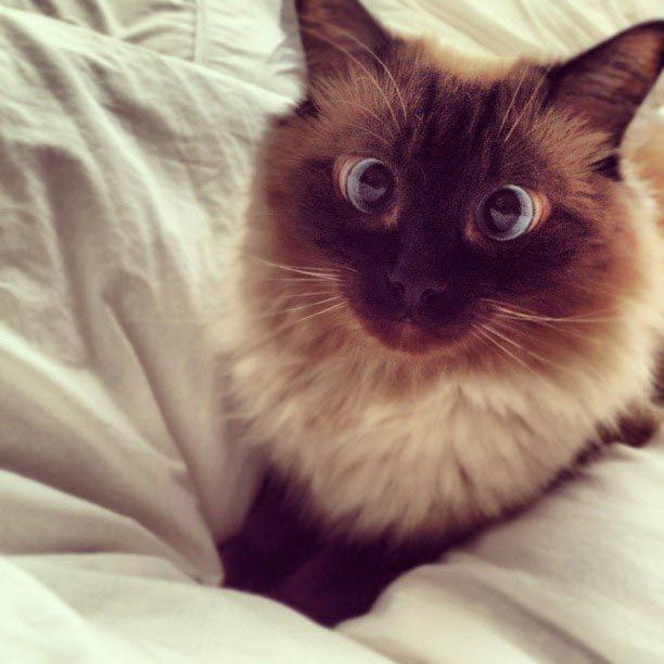 Милейшие косоглазые коты, чей изъян делает их уникальными