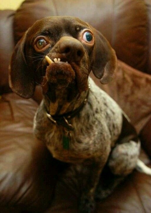 Dog With Bad Teeth Pictures Funny