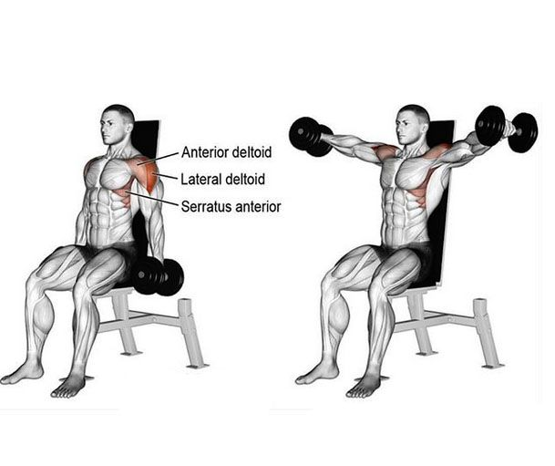 Image result for dumbbell lateral raise form