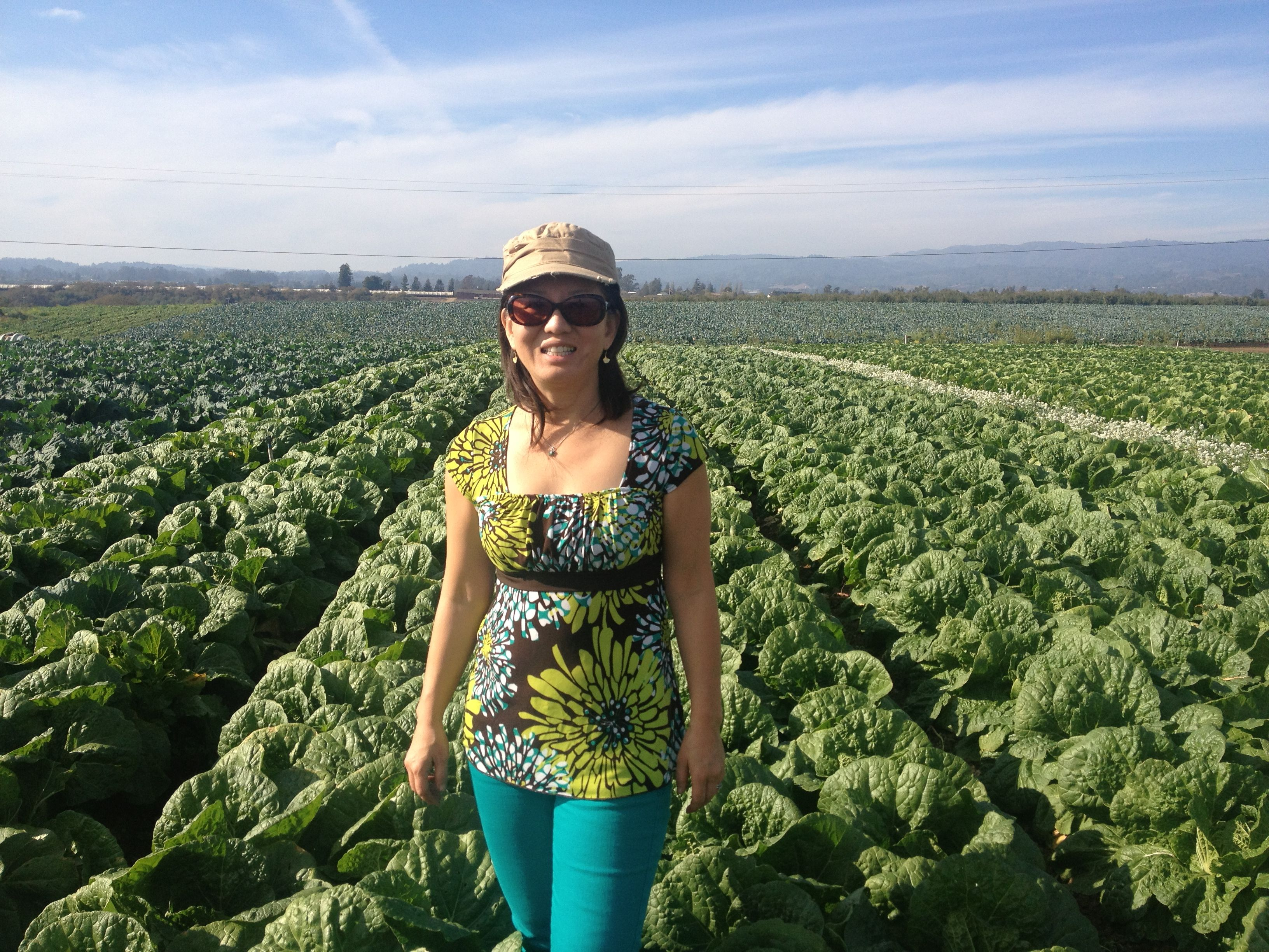 Lakeside Organic Garden Watsonville Ca Napa Cabbage Farming Is Disearing Due To Lack
