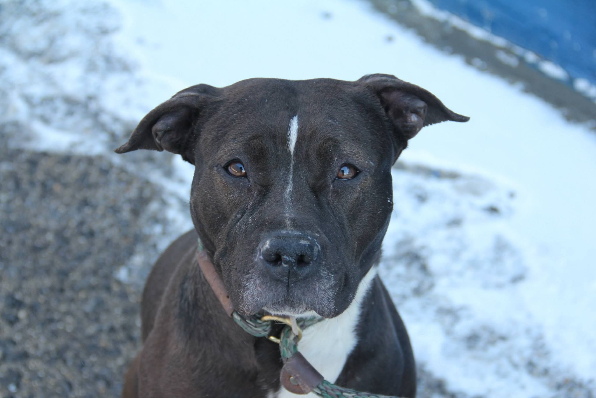 TO BE DESTROYED 02/05/14 Brooklyn Center P My name is