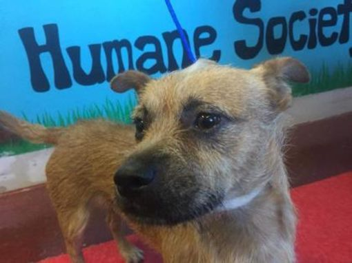 Pictures Of Benji A Terrier Unknown Type Small For Adoption In Labelle Fl Who Needs A Loving Home Pets Adoption Shelter Dogs